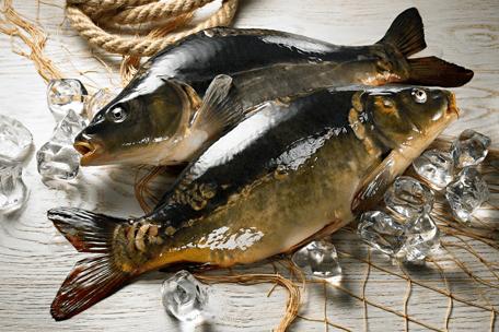 Świąteczna ryba – karp